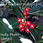 Holly Photo